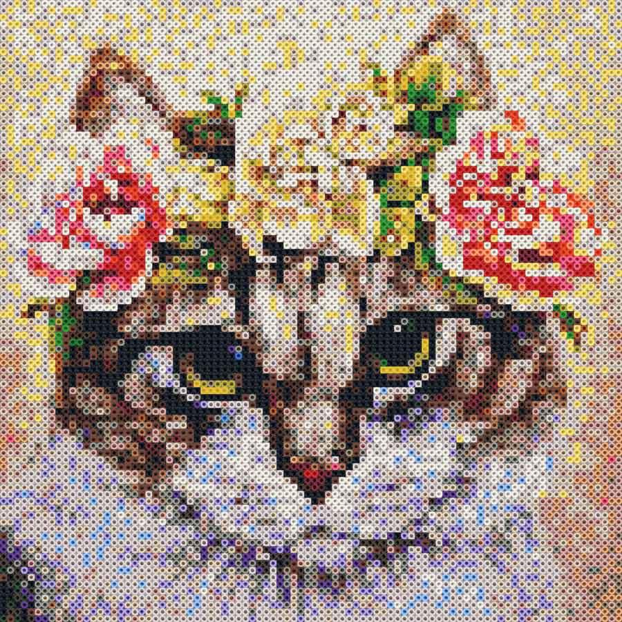 gattino-immagine.2
